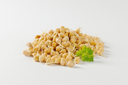 sprouted: Heap of sprouted chick peas Stock Photo