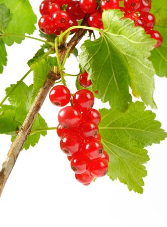sprig: Sprig of red currants on white background Stock Photo