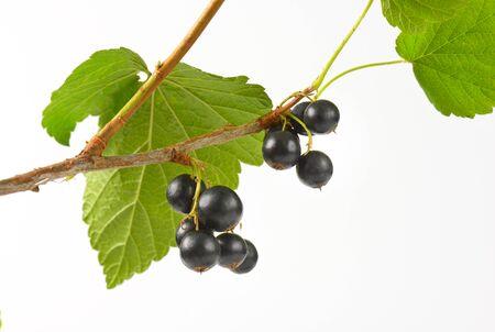 black currants: Sprig of black currants on white background