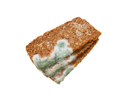 decomposed: Slices of brown bread covered with mold
