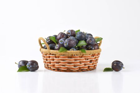 picked: Fresh picked damson plums in small decorative basket