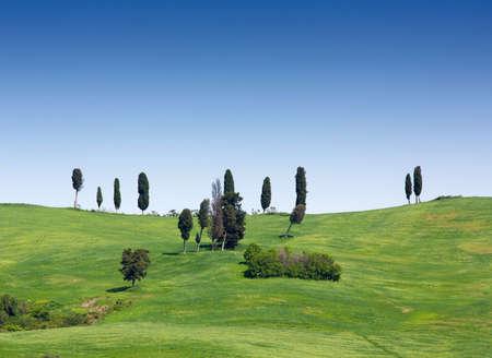 volterra: Green fields and meadows near Volterra, Tuscany, Italy