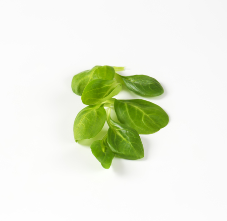 rapunzel: fresh lambs lettuce leaves on white background
