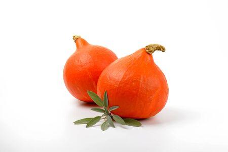 two orange pumpkins and sprig of sage on white background