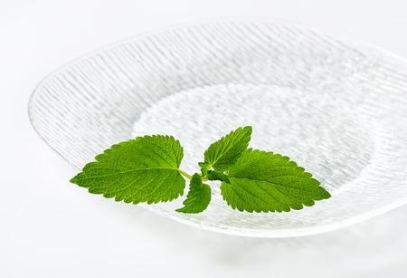 lemon balm: Fresh mint leaves on a glass plate