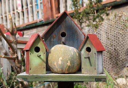 Three wooden bird houses and pumpkin in Popeye village, Sweethaven, Malta Reklamní fotografie