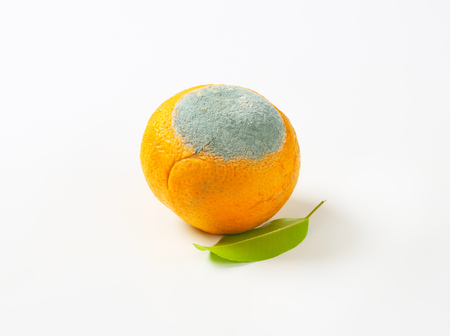 orange with mold on it Stock Photo