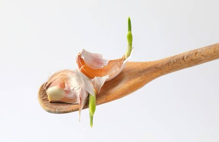 cloves of fresh garlic on wooden spoon