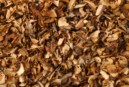 dried mushrooms as a background