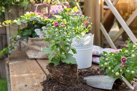 plant flowers Stock Photo