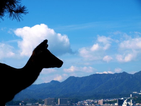 Silhouette of a Deer at Miyajima, Hiroshima, Japan Stock Photo