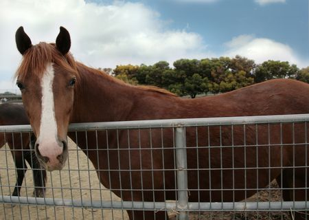 Brown Horse in a Stable Stock Photo