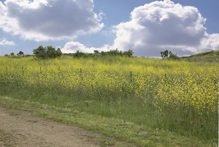 Meadow Background With Sky,Grass and Yellow Flowers Stock Photo - 483813