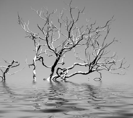 Bare Tree in the Water Stock Photo - 833172