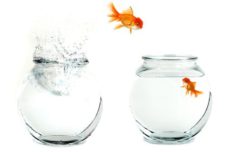 goldenfish: Golfish Jumping From One Bowl to Another