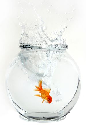 crowded space: Goldfish Landing In a Bowl Stock Photo