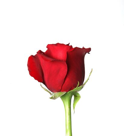 photo of object s: Lovely Red Rose Not Yet Opened