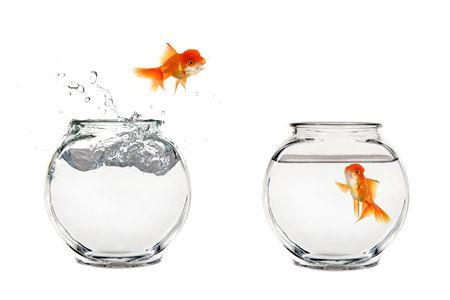 Goldfish Jumping Van Een Bowl naar een andere Stockfoto