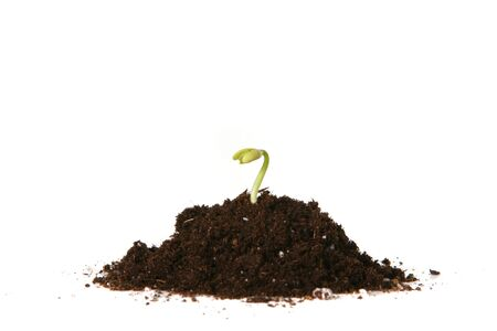vegetate: New Seed Growing in the Dirt