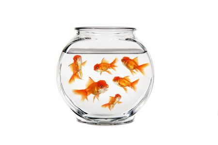 gold fish bowl: Overcrowded Gold Fish Bowl Stock Photo