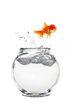 crowded space: Goldfish Escaping His Aquarium Stock Photo