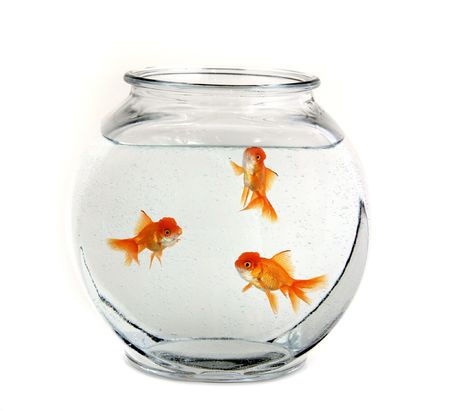 crowded space: Three Goldfish Swimming in a Bowl Stock Photo