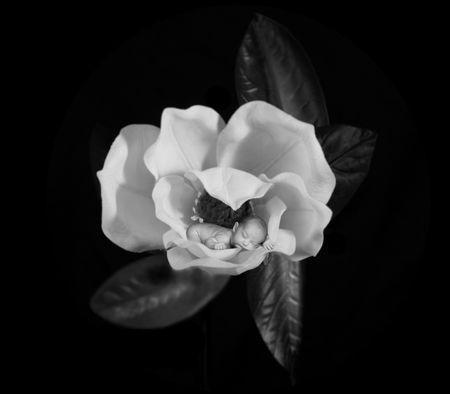 Infantil beb� durmiendo dentro de una flor de magnolia  Foto de archivo - 874768