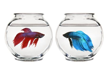 gold fish bowl: Calm Bowl of Water in a Gold Fish Bowl