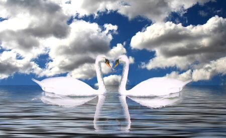 Serene Landscape of Clouds Reflected on the Water With Swans Stock Photo - 1582770