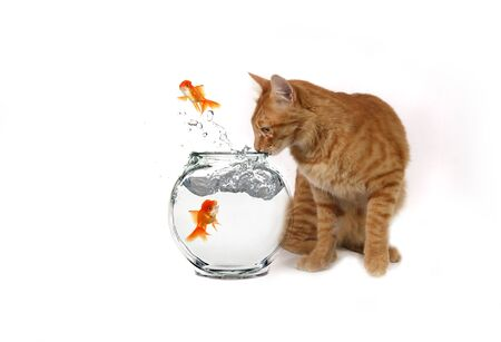 Humorous Image of a Cat Watching Goldfish Escape Their Bowl photo