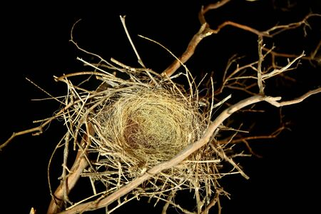 composite: Bird Nest on Black Perfect to Create a Fantasy Composite With Babies High Depth of Field