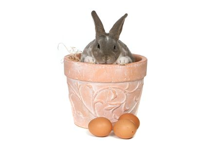 Grey Easter Rabbit Bunny in Pot Isolated on White Stock Photo