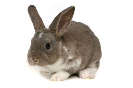Grey Easter Rabbit Bunny Isolated on White
