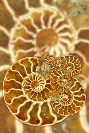 Artistic Montage Using Nautilus Fossil Pattern Stock Photo - 3182398