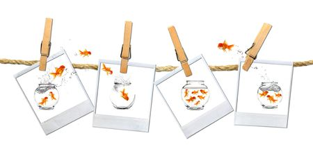 Looking or a Stable Place: Goldfish Escape