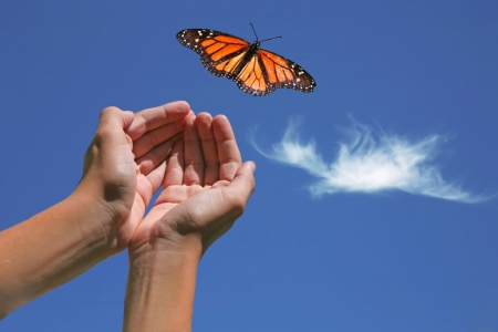 Monarch Butterfly Released into Nature With Hands Showing Stock Photo - 3339304