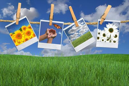 Green Grass and Blue Sky With Hanging Photos of Flowers