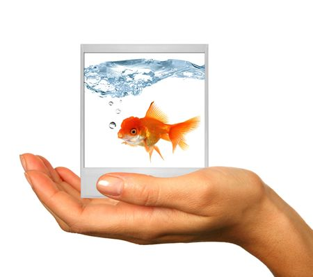 Human Hand Isolated on White With Polaroid Film Photograph of Goldfish. Insert Your Own Image photo