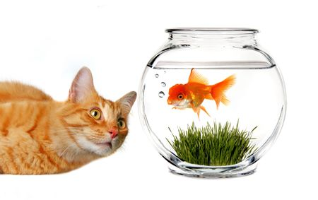 Orange Tabby Cat Mischievously Watching a Goldfish in a Bowl