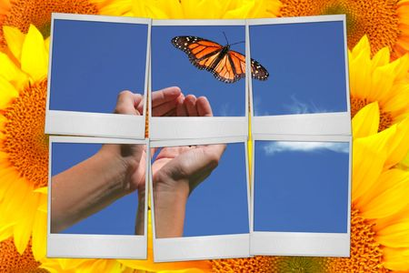 hand free: Colorful Montage of Butterfly, Sunflowers and FIlm Blanks