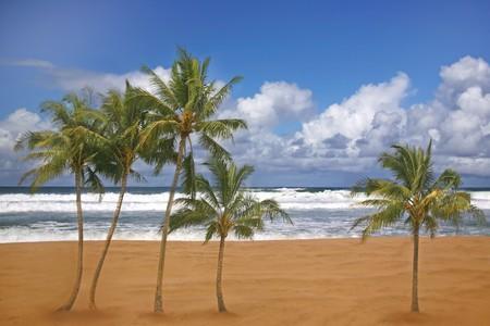 Tropical Palm Trees on a Beach Front in Kauai Hawaii  Stock Photo - 3947692