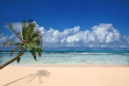 kauai: Palm Tree Overlooking Pristine Beach in Hawaii  Stock Photo