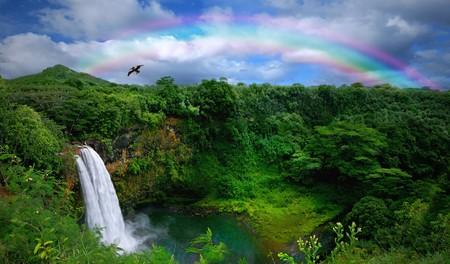 hawai: Catarata Kauai en el arco iris con las aves y los gastos generales