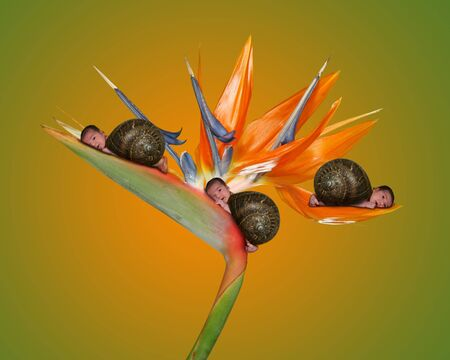 Sweet Babies in a Fantasy Portrait of Snails on a Bird of Paradise Flower photo