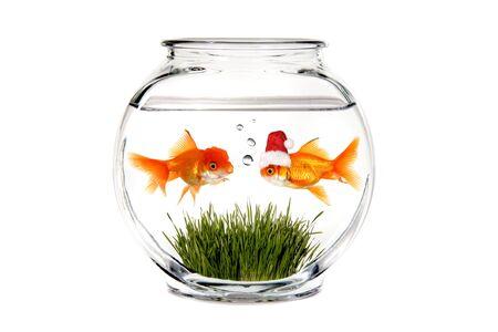 Goldfish Santa vertellen wat hij wil voor Kerstmis in een Fish Bowl