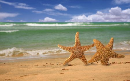 humorously: Pair of Starfish Humorously Walking Out of the Surf Onto the Beach