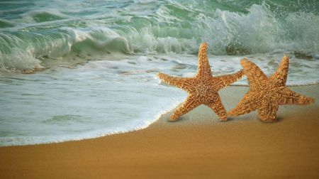 fish star: Star Fish adorable Paseos por la playa en el Surf Foto de archivo