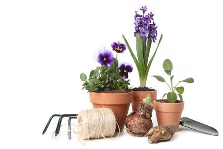 Pansies and Hyacinth With Gardening Tools on White Background photo