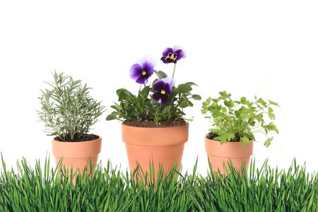 Herb and Foral Spring Time Gardening in Clay Pots With Grass Border photo