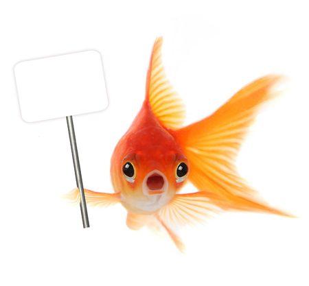 pez dorado: Goldfish Con Conmocionados Mira en su rostro. Concepto de muestra sorpresa, problemas o preocupaciones